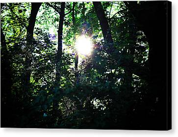 Out Of The Woods Canvas Print - Out Of The Darkness by Bill Cannon