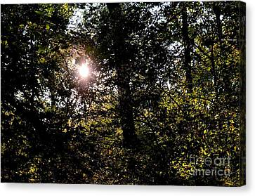 Out Of The Darkness He Calls Canvas Print by Maria Urso
