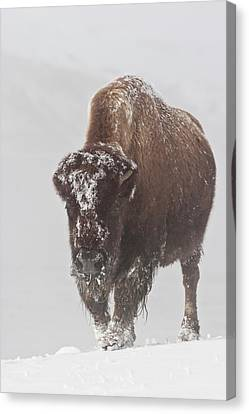 Out Of The Fog Canvas Print by D Robert Franz