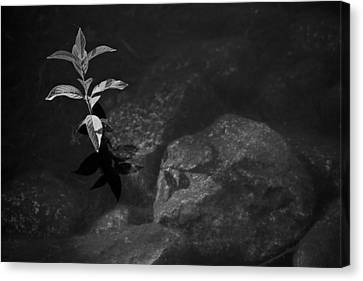 Out Of The Water Comes Shadows Bw Canvas Print by Karol Livote