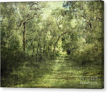 Outback Bush Canvas Print by Linde Townsend