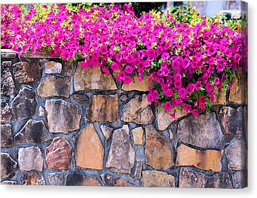 Over The Wall Canvas Print by Jan Amiss Photography