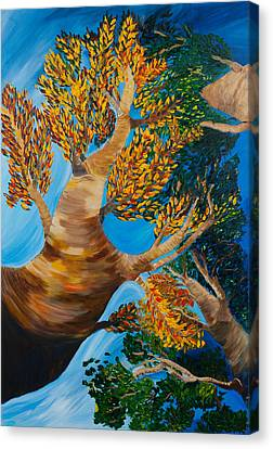Overhead Canvas Print by Dani Altieri Marinucci