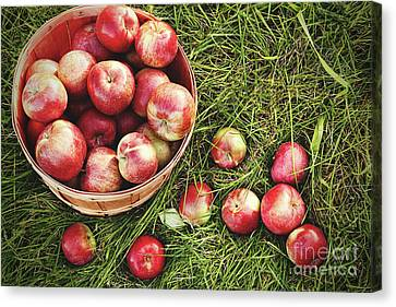 Overhead Shot Of A Basket Of Freshly Picked Apples Canvas Print by Sandra Cunningham