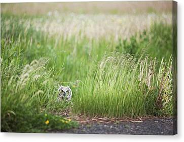 Owl In The Grass Thunder Bay, Ontario Canvas Print by Susan Dykstra