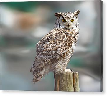 Owl Love Canvas Print by Naman Imagery