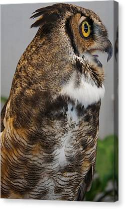 Owl Canvas Print by Michael Albright