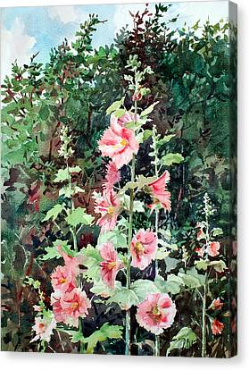 Oxenden Hollyhock Canvas Print by Peter Sit