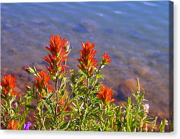 Paintbrush At Water's Edge Canvas Print