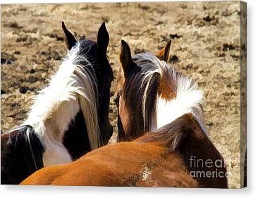 Painted Horses IIi Canvas Print