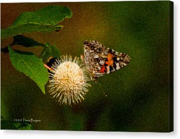 Canvas Print featuring the photograph Painted Lady Impasto by Travis Burgess