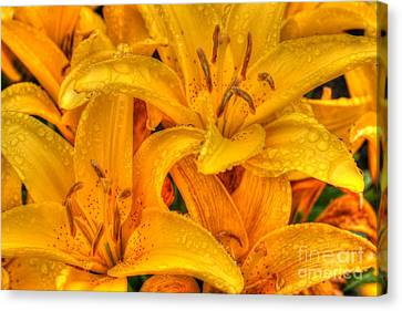 Painted Lily Canvas Print by Tap On Photo