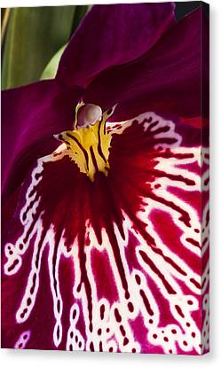 Canvas Print featuring the photograph Painted Orchid Ll by Shirley Mitchell