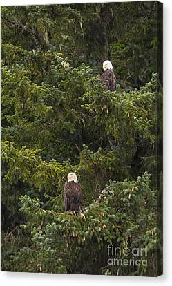 Pair Of Bald Eagles Canvas Print by Darcy Michaelchuk