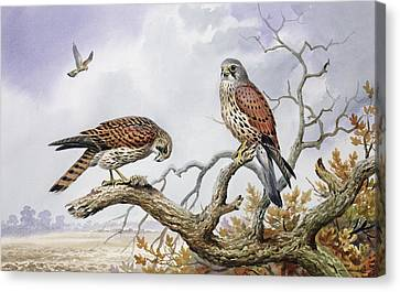 Pair Of Kestrels Canvas Print by Carl Donner