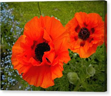 Canvas Print featuring the painting Pair Of Poppies by Renate Nadi Wesley
