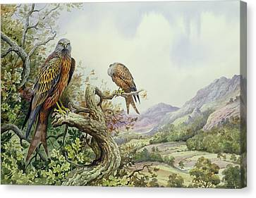 Pair Of Red Kites In An Oak Tree Canvas Print by Carl Donner