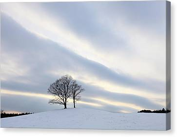 Pair Of Trees On Hill At Sunset Canvas Print by I am happy taking photographs.