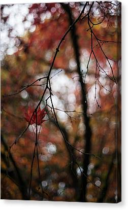 Red Leaf Canvas Print - Pair Revisited by Mike Reid