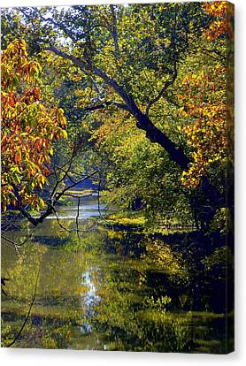 Pairie Oaks Canvas Print by Mindy Newman