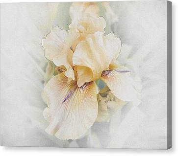 Pale Beauty Canvas Print by Lynn Wohlers