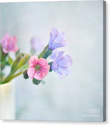 Pale Pink And Purple Pulmonaria Flowers Canvas Print by Lyn Randle