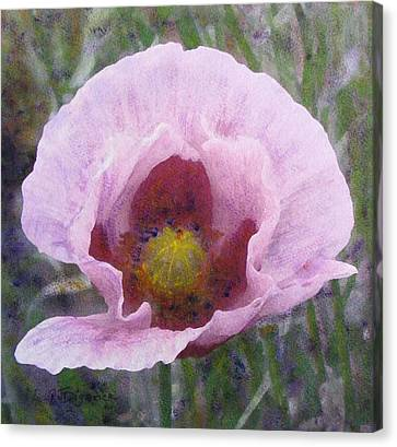 Canvas Print featuring the painting Pale Pink  Poppy by Richard James Digance