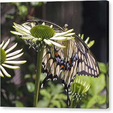 Pale Swallowtail Canvas Print