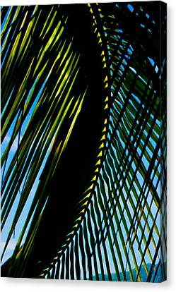 Jaco Canvas Print - Palm Frond Curve by Anthony Doudt