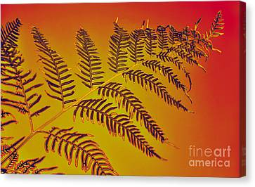 Palm Frond In The Summer Heat Canvas Print by Kaye Menner