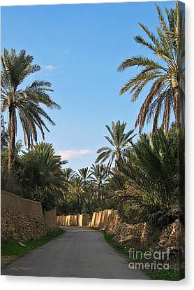 Canvas Print - Palm Gardens In Palmyra Oasis by Issam Hajjar