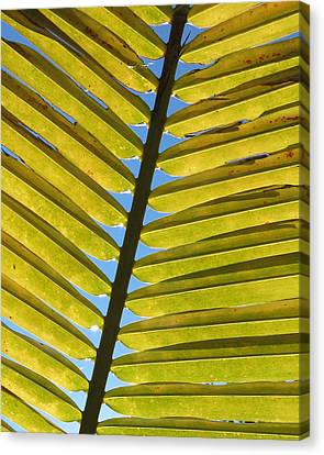 Palm Leaf Canvas Print by Chris Andruskiewicz