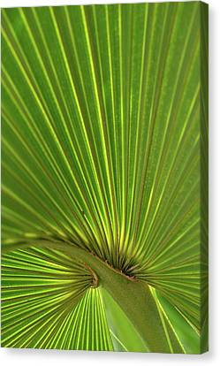 Canvas Print featuring the photograph Palm Leaf by JD Grimes