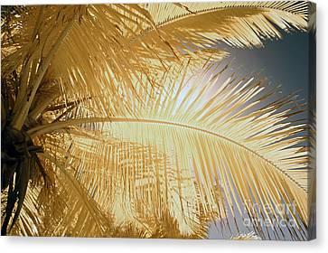 Palm Leaf Canvas Print by Keith Kapple