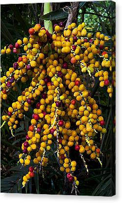 Palm Seeds Baroque Canvas Print by Steven Sparks