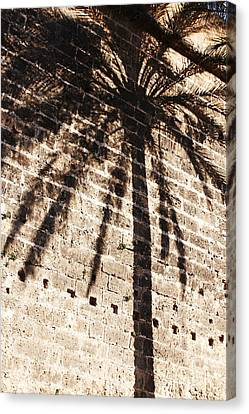 Palm Shadow Canvas Print