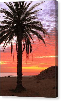 Palm Tree And Dawn Sky Canvas Print