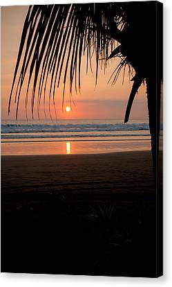 Jaco Canvas Print - Palm Tree At Sunset by Anthony Doudt