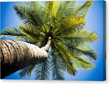 Jaco Canvas Print - Palm Tree From Below by Anthony Doudt