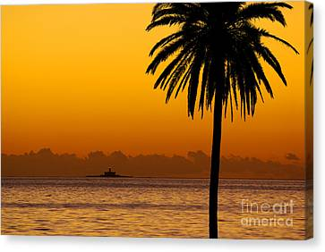 Palm Tree Sunset Canvas Print by Carlos Caetano