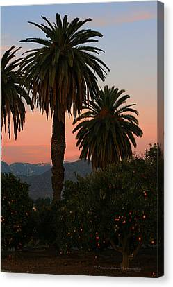 Palm Trees And Orange Trees Canvas Print by Dorothy Cunningham