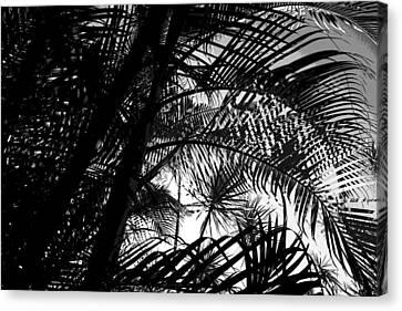 Palm Trees Canvas Print by Colleen Cannon