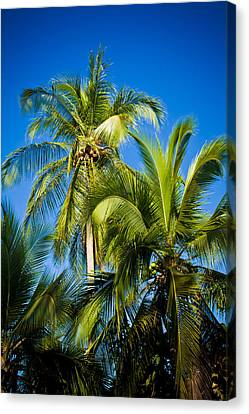 Jaco Canvas Print - Palm Trees In The Sun by Anthony Doudt