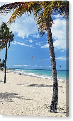 Palm Trees On Ocean Park Beach Canvas Print by George Oze