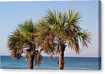 Palm Trees Canvas Print by Sandy Keeton