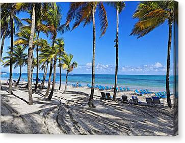 Palm Trees Shaded Beach Canvas Print by George Oze