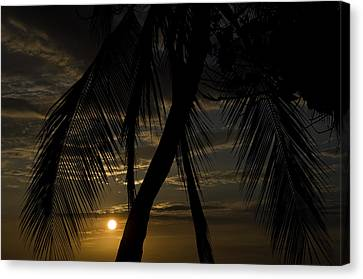 Palm Trees Silhouetted By The Setting Canvas Print by Todd Gipstein