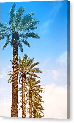 Palm Trees Canvas Print by Susi Stroud