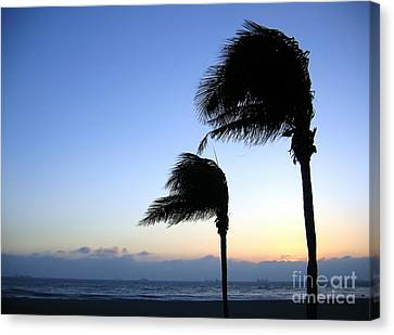 Palm Trees Swaying In The Wind Canvas Print by Yali Shi