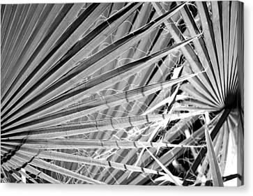 Palm Veils Canvas Print